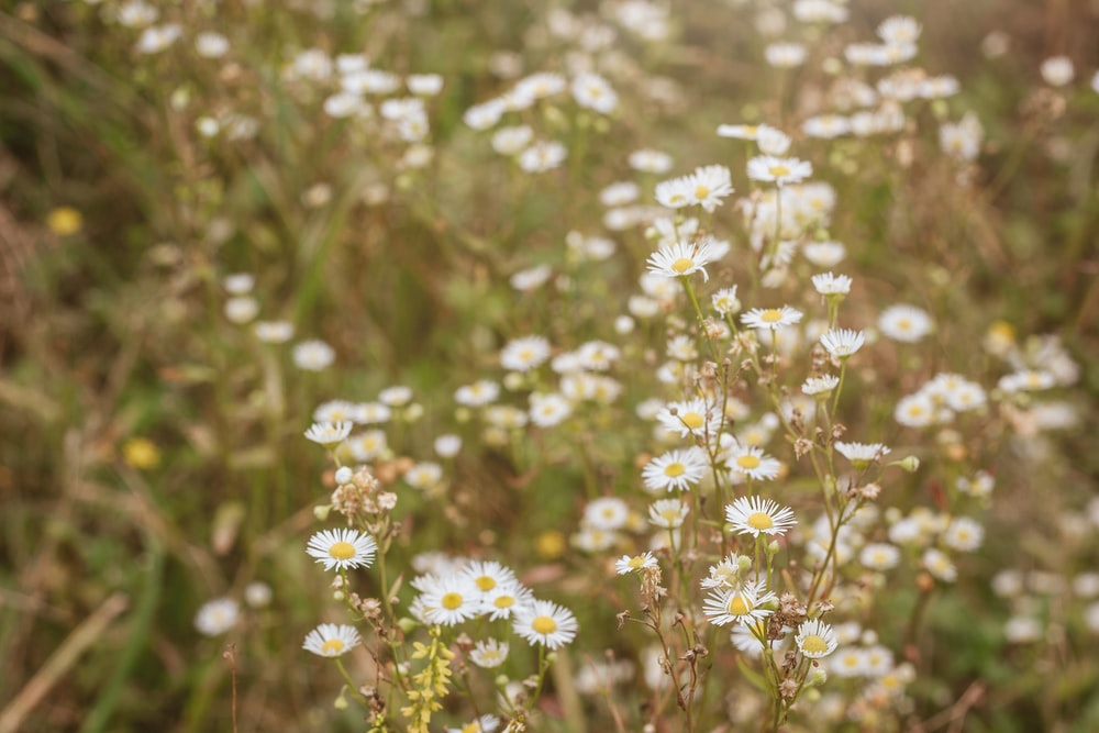 white flowers in tilt shift lens