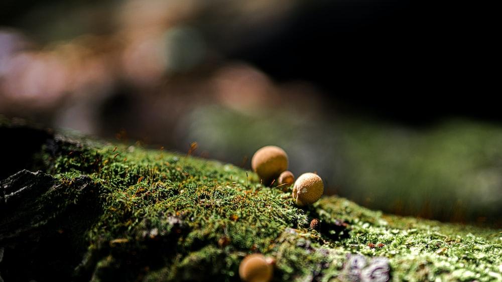 brown mushrooms on green moss in tilt shift lens