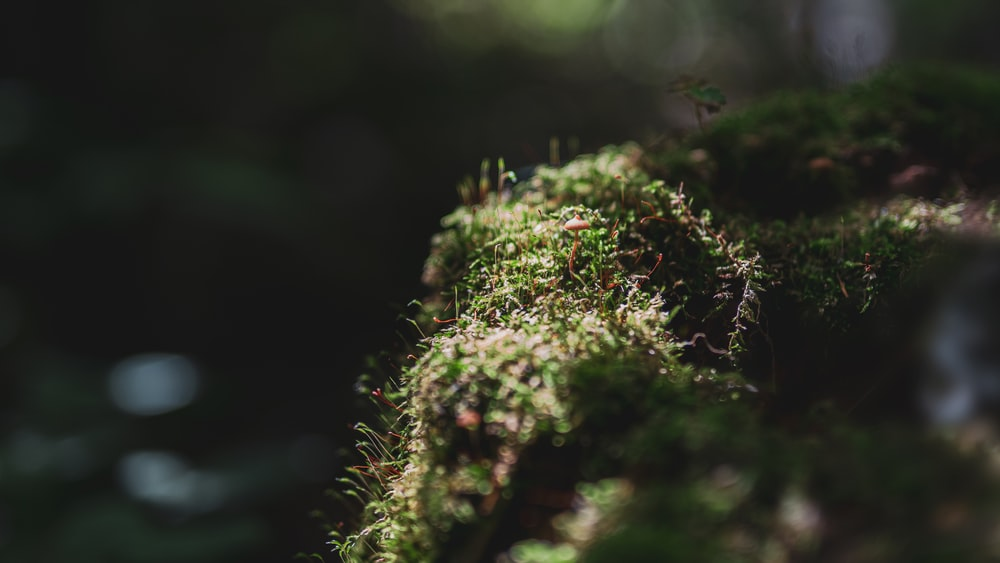 green moss in macro photography