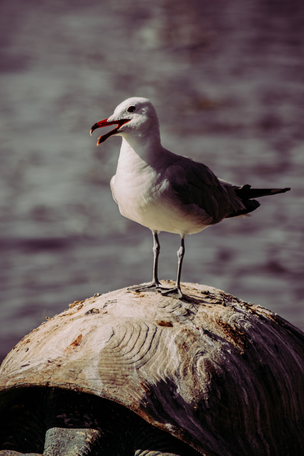white and gray bird on brown rock
