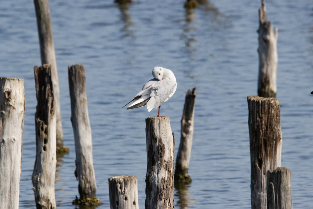 white and gray bird on brown wooden post during daytime