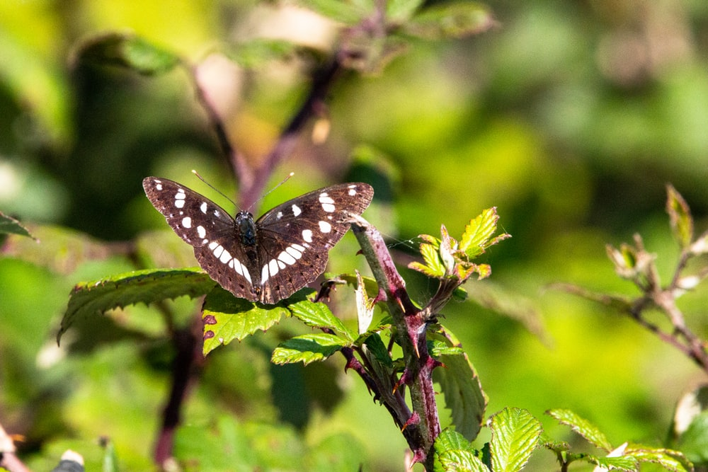 black and white butterfly perched on green plant during daytime