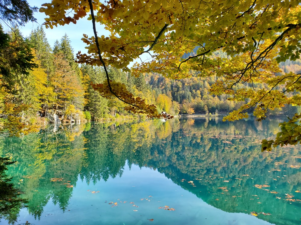 yellow and green trees beside body of water