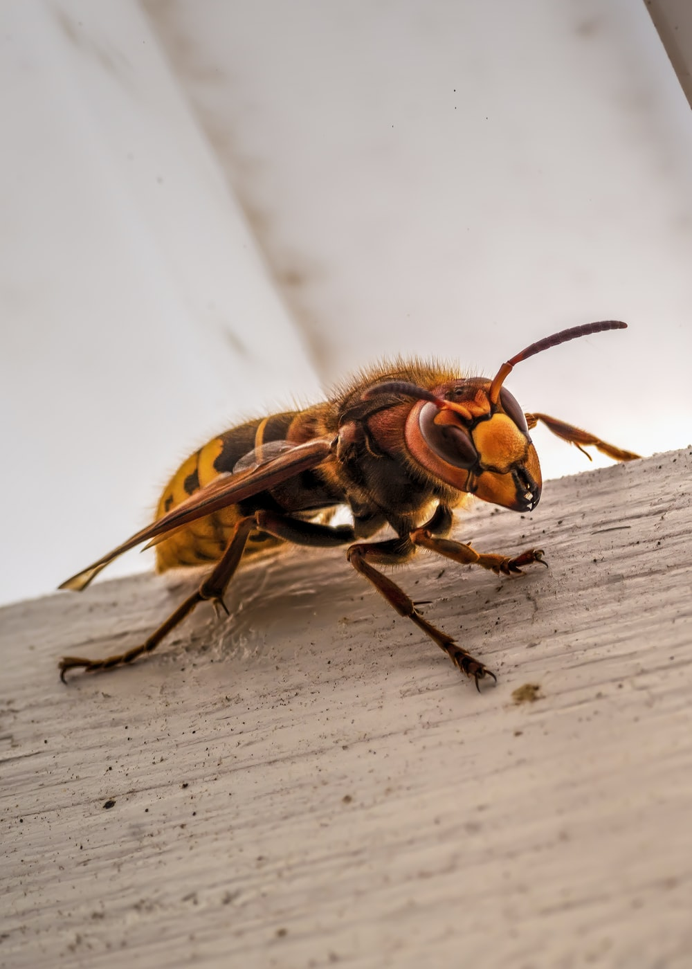 black and yellow bee on white wooden surface