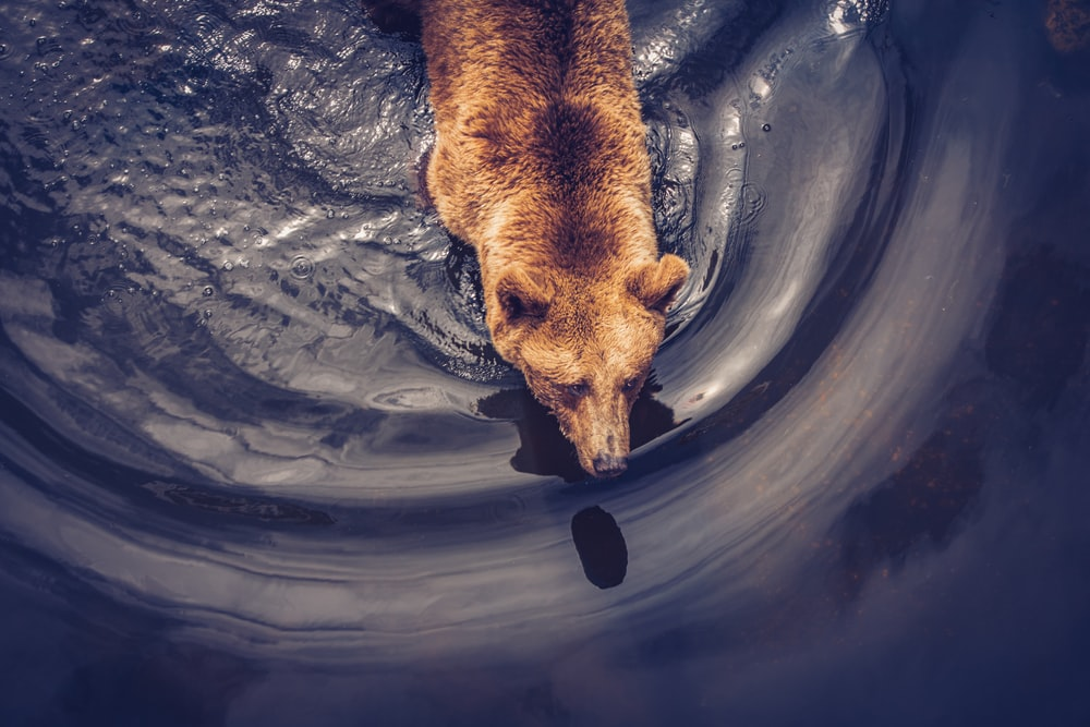 brown short coated dog in water