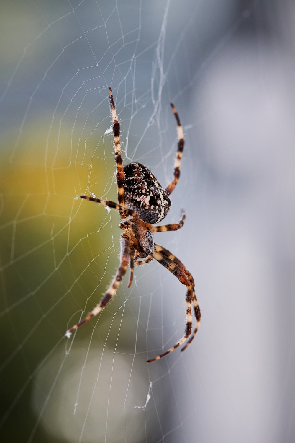 brown and black spider on web in close up photography during daytime
