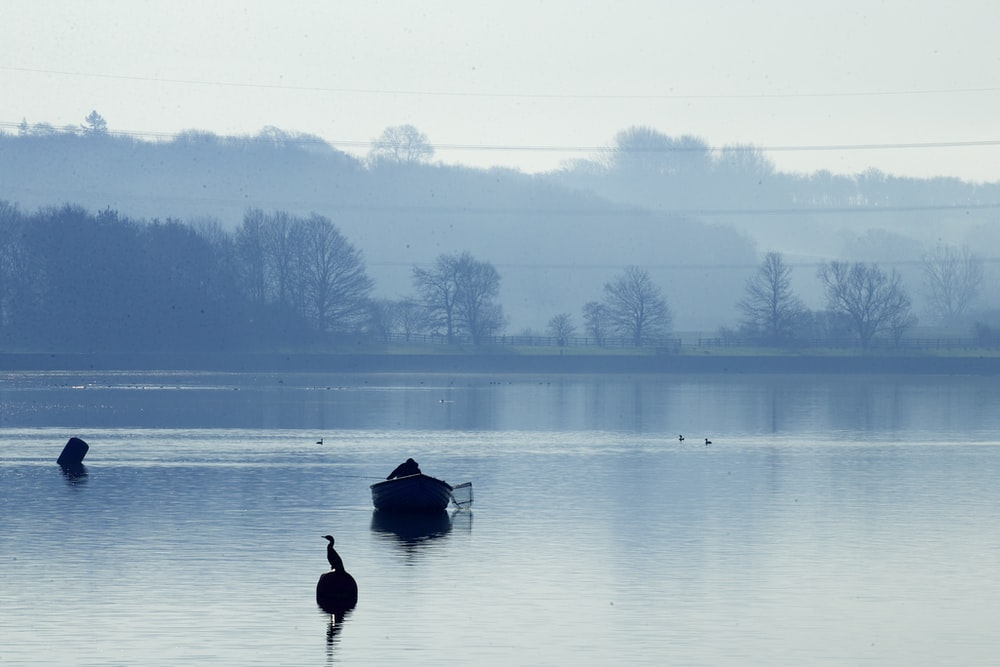 silhouette of duck on water during daytime