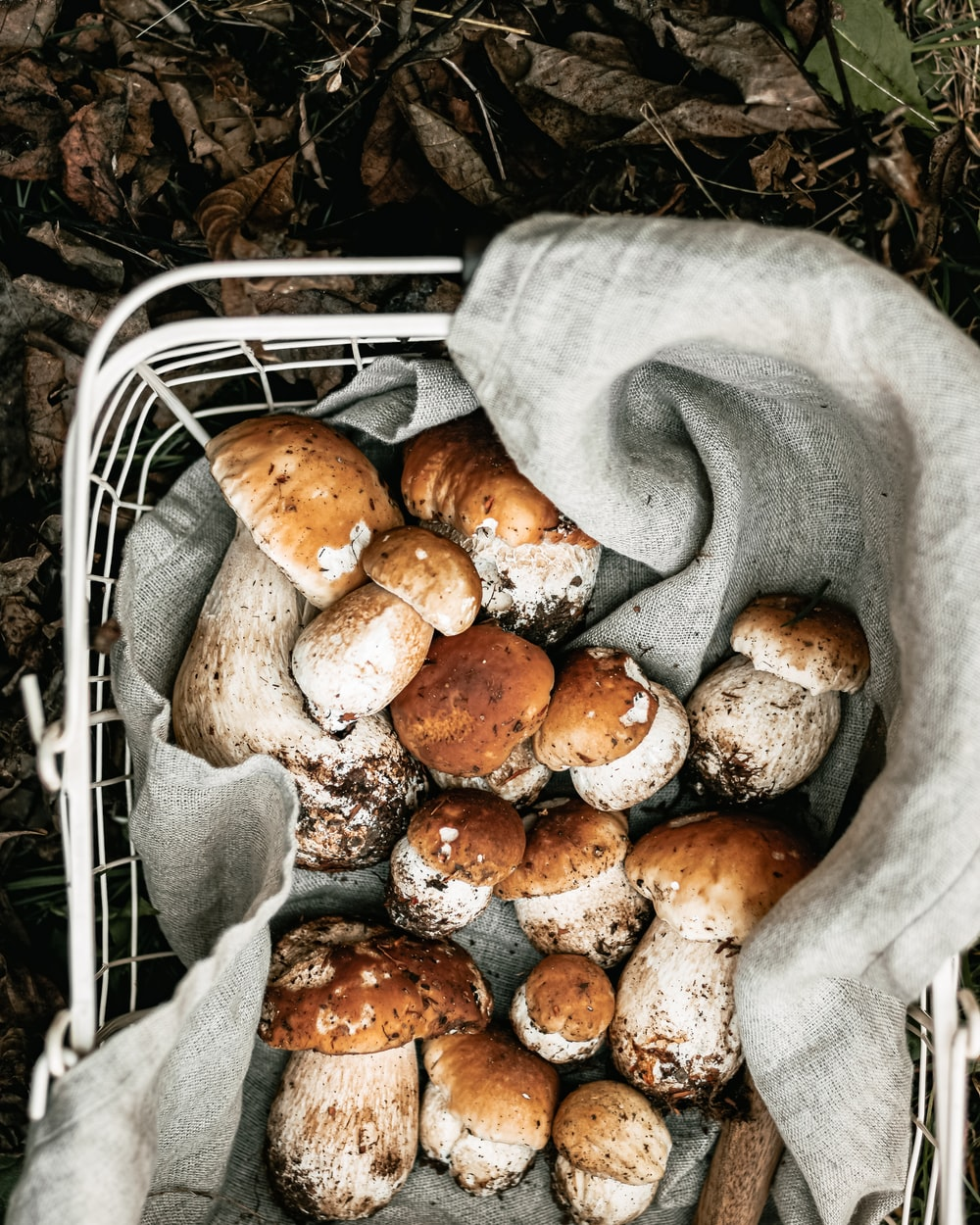 brown and white mushrooms on white metal rack