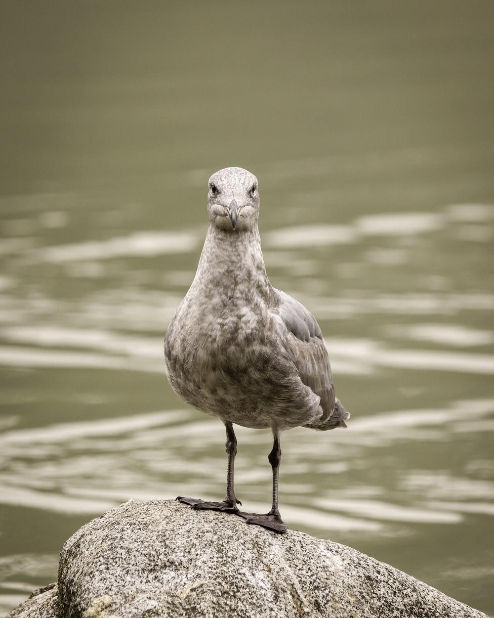 brown bird on brown rock near body of water during daytime
