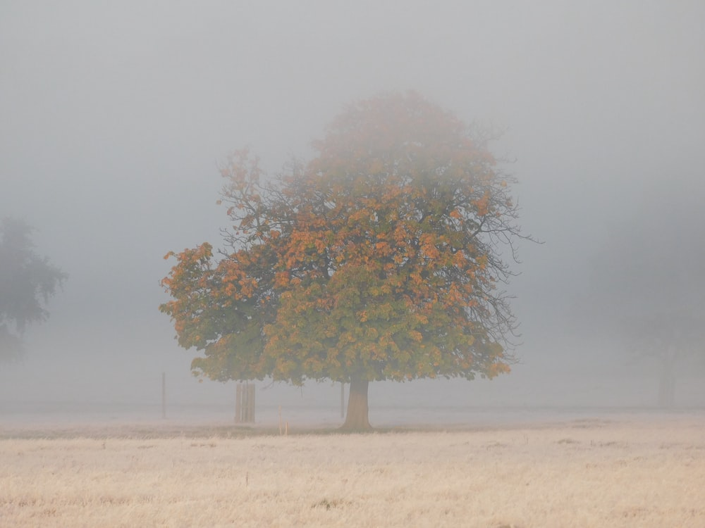 green and brown tree on brown field under gray sky