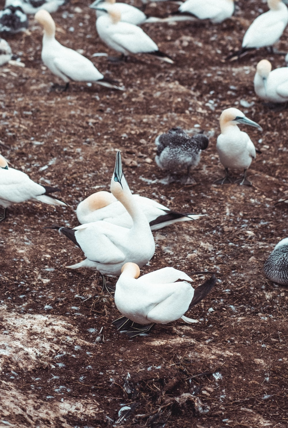 white and black birds on ground during daytime