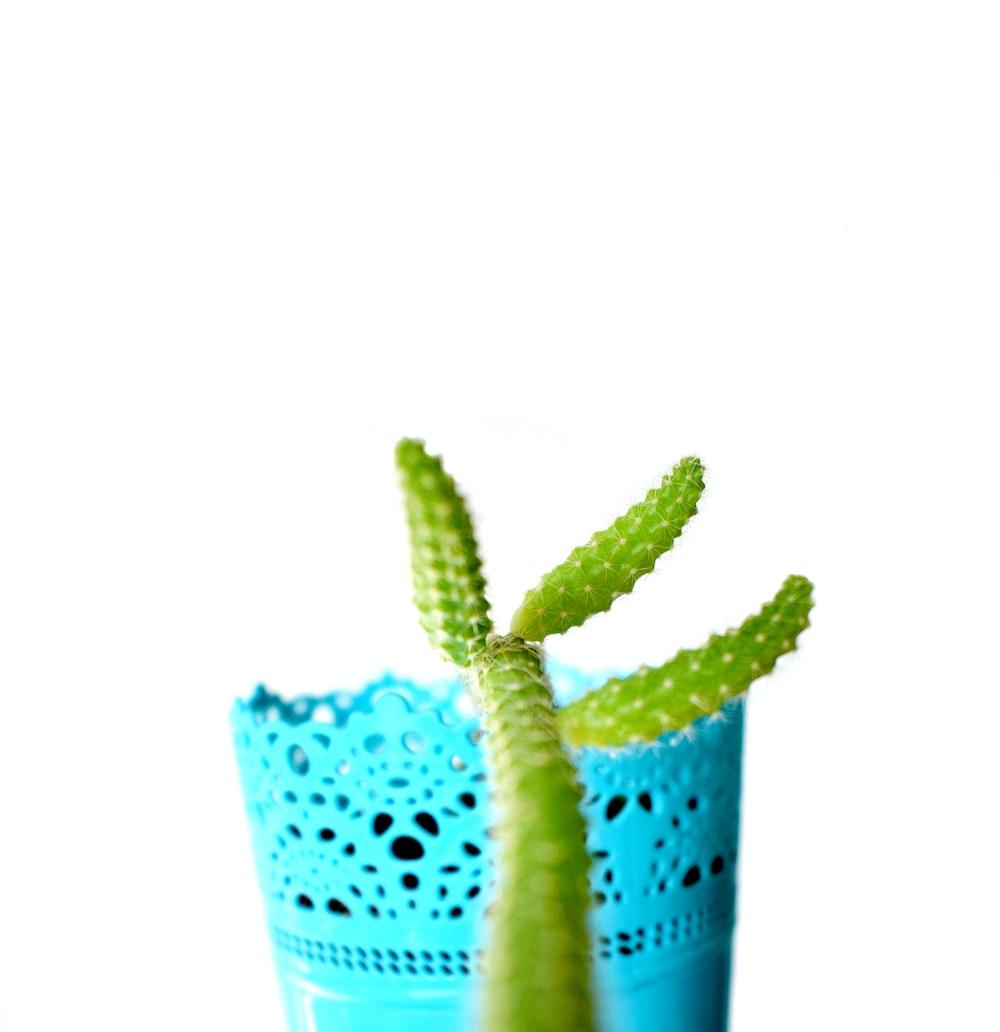 green cactus plant in pink plastic pot