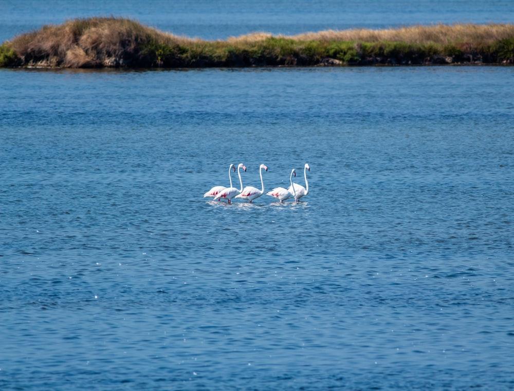 white swan on blue sea during daytime
