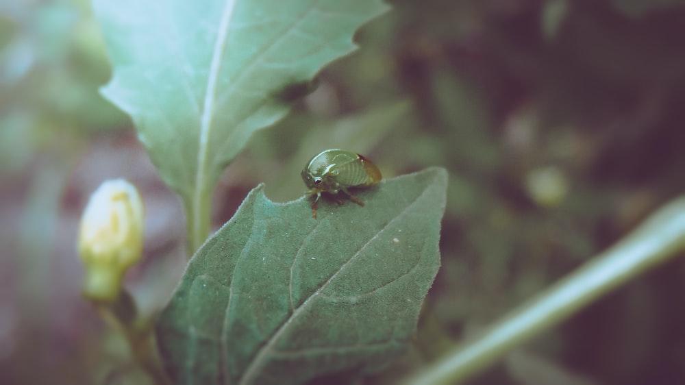 green bug on green leaf