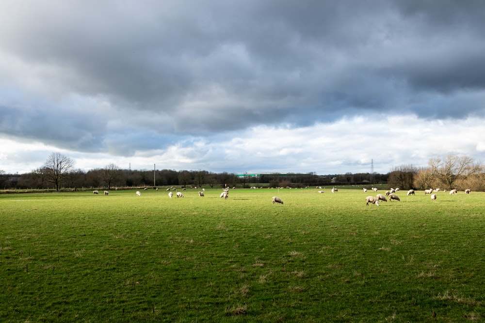 people on green grass field under cloudy sky during daytime