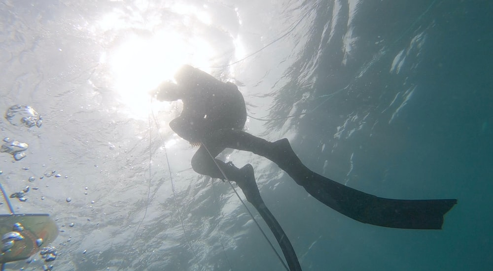 woman in black and white bikini under water
