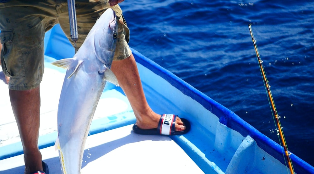 person holding gray fish on blue and white boat during daytime