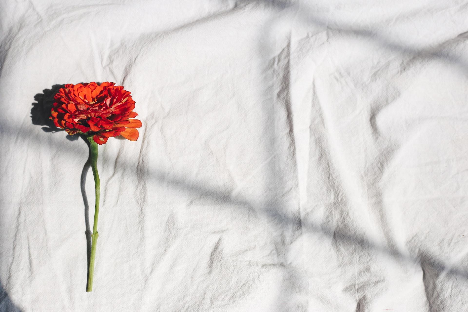 red flower on white textile