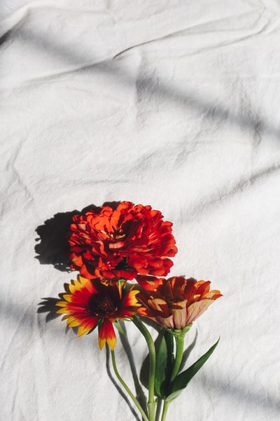 red and yellow flower on white textile