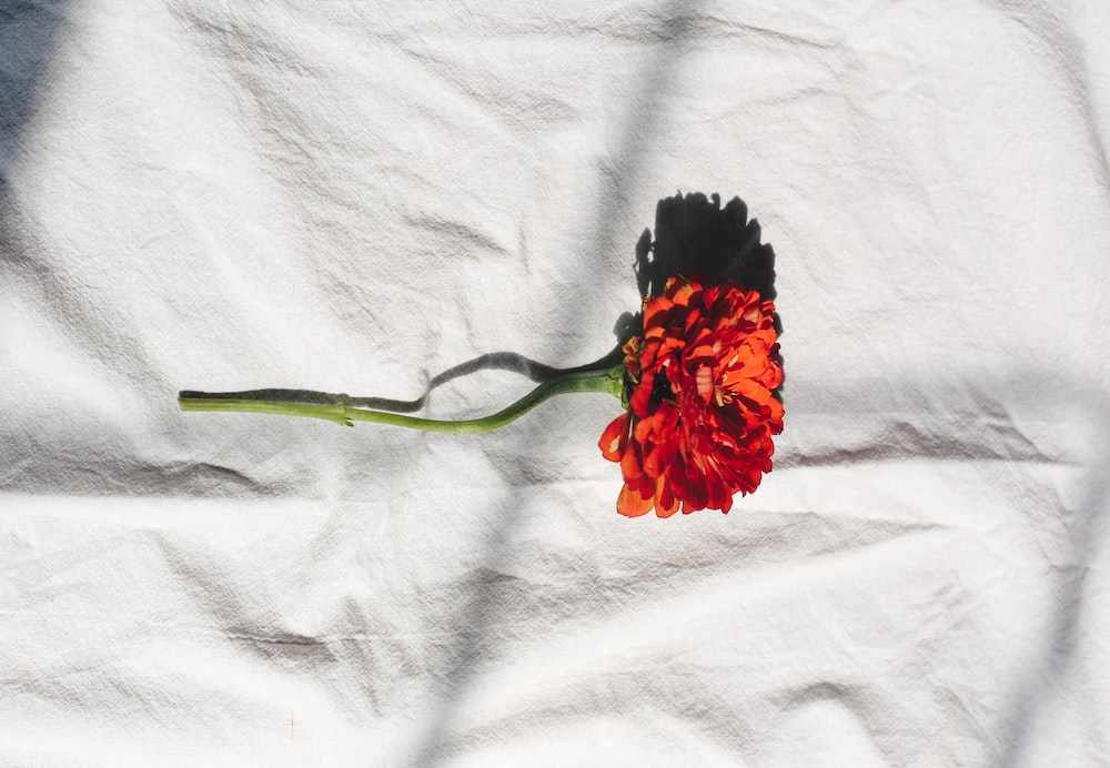 red and black flower on white textile