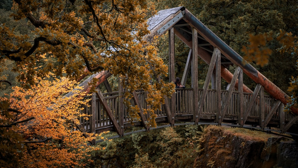 brown wooden bridge surrounded by trees