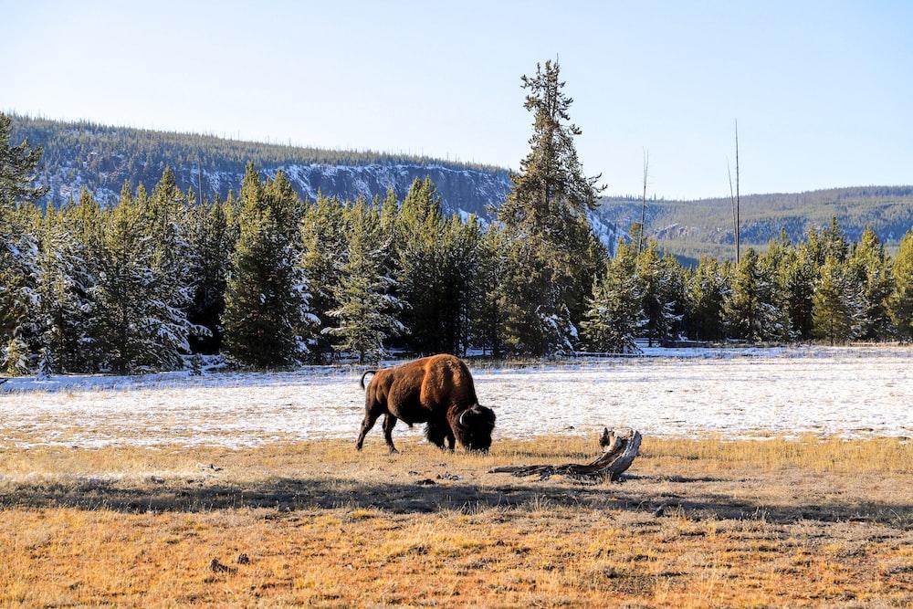 brown animal on brown field during daytime