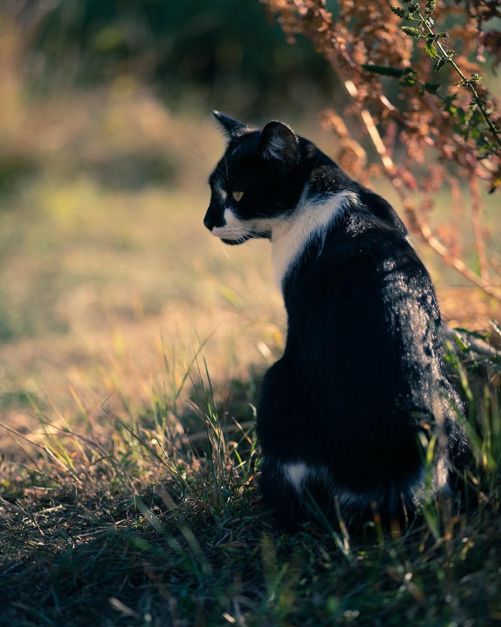 tuxedo cat on green grass field during daytime