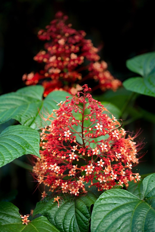 red and green flower in tilt shift lens