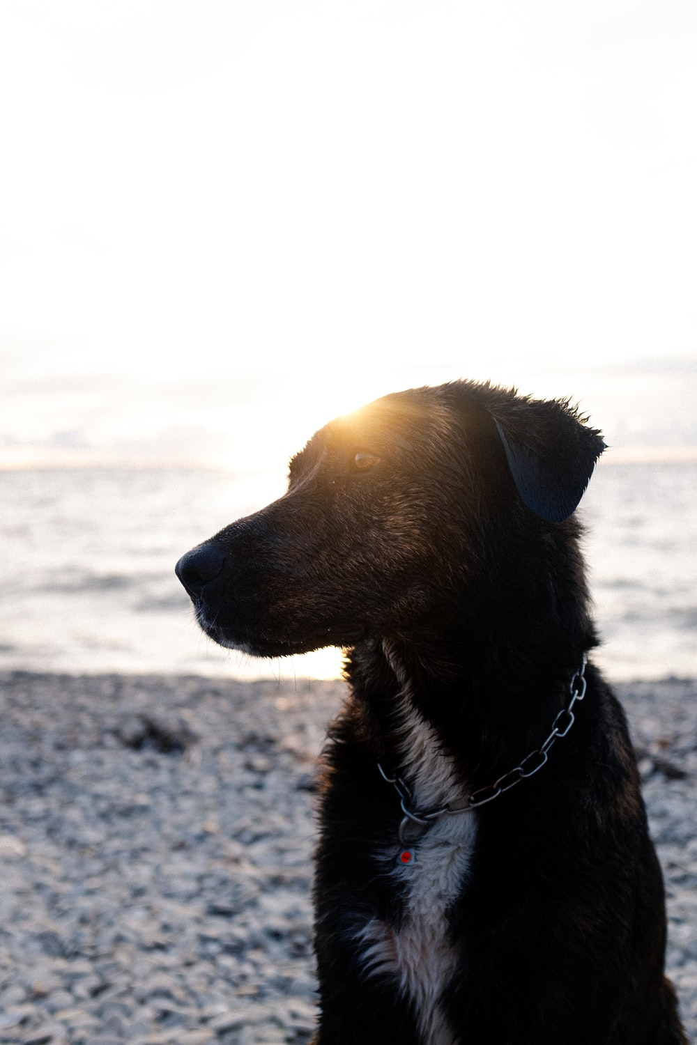 brown short coated dog on gray sand during daytime