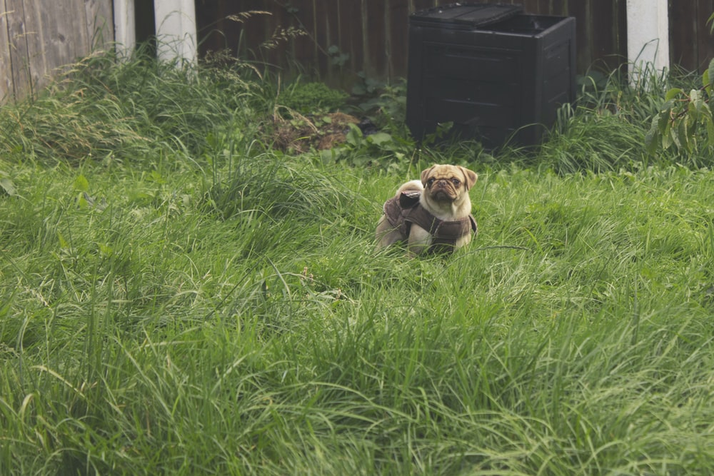 brown and white short coated puppy on green grass field during daytime