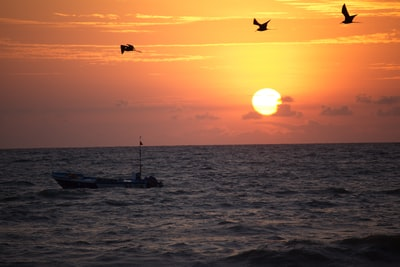 silhouette of bird flying over the sea during sunset ecuador teams background
