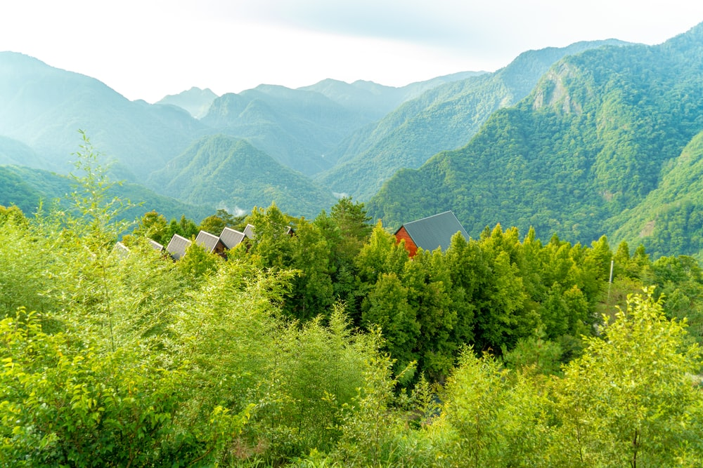 green trees and mountains during daytime