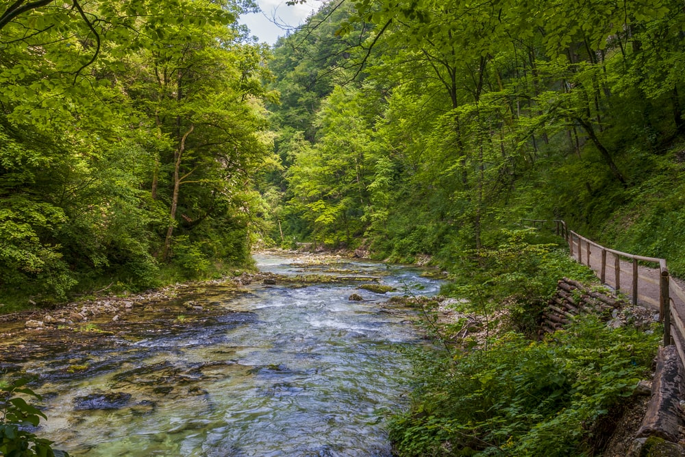 river between green trees under blue sky during daytime