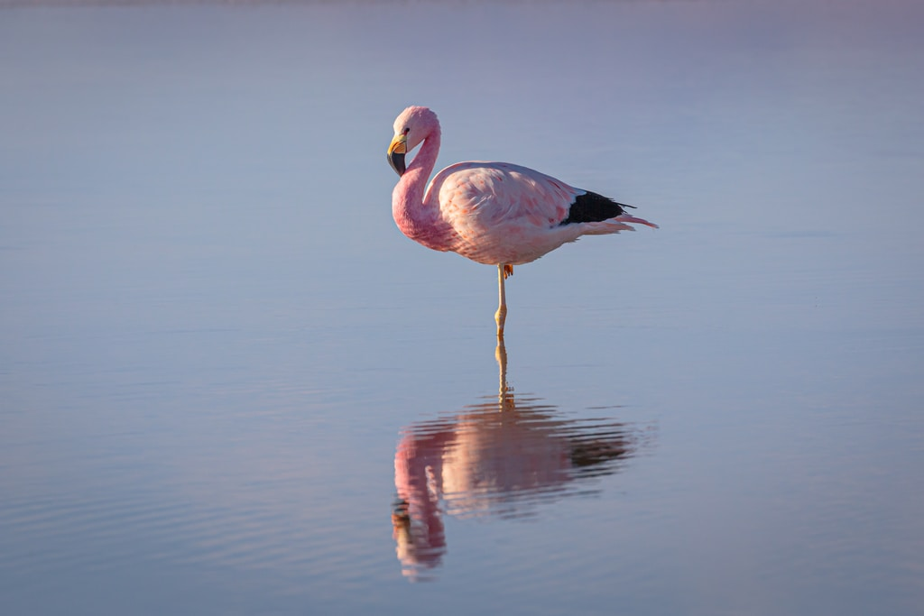 pink flamingo on water during daytime