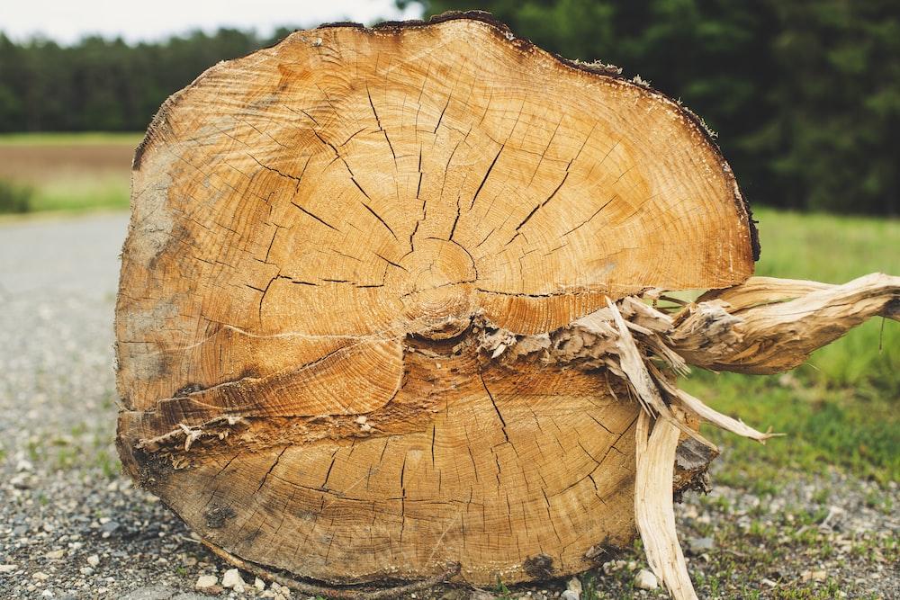 brown wood log on black soil
