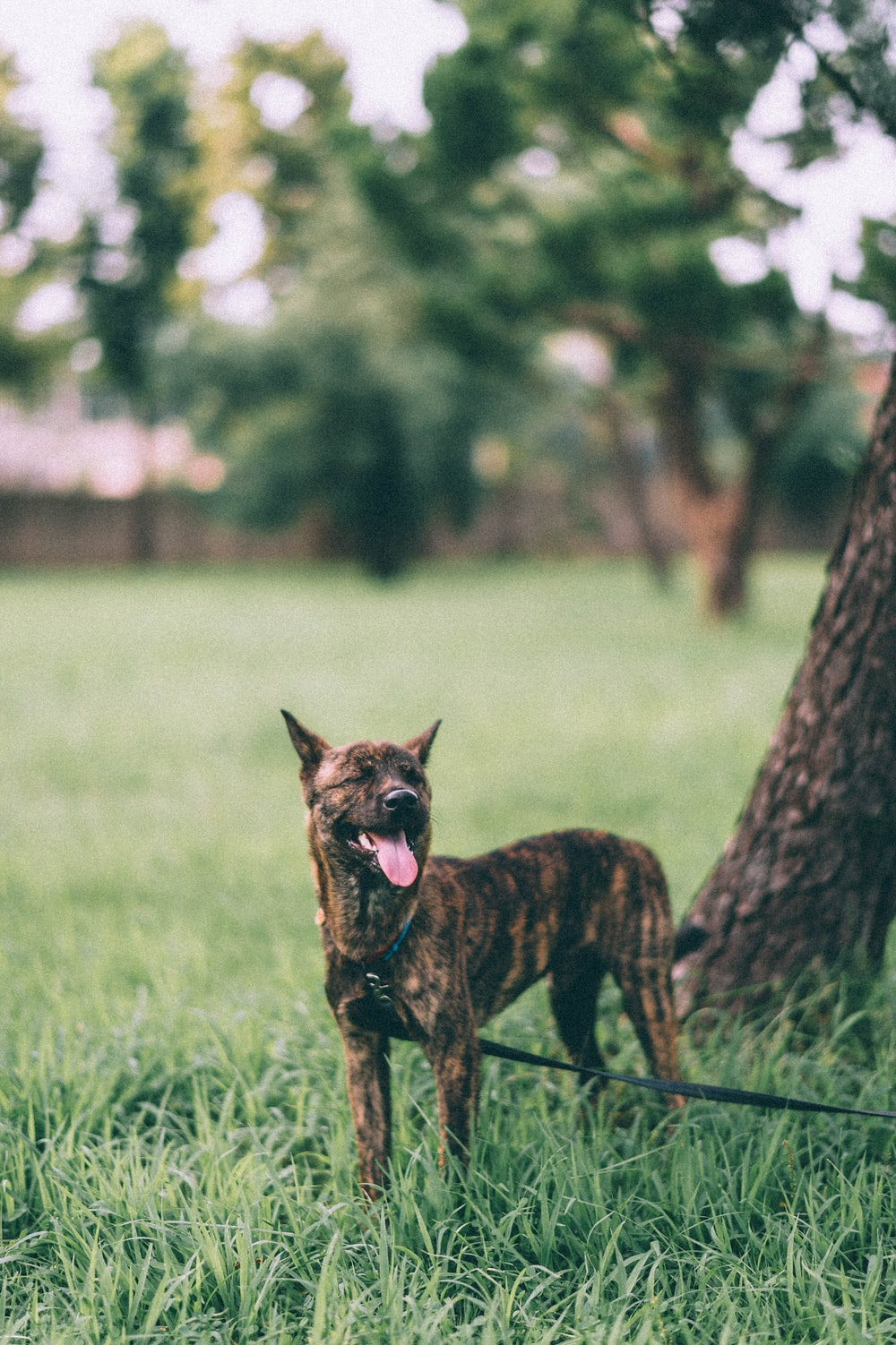 brown and black short coated dog on green grass field during daytime