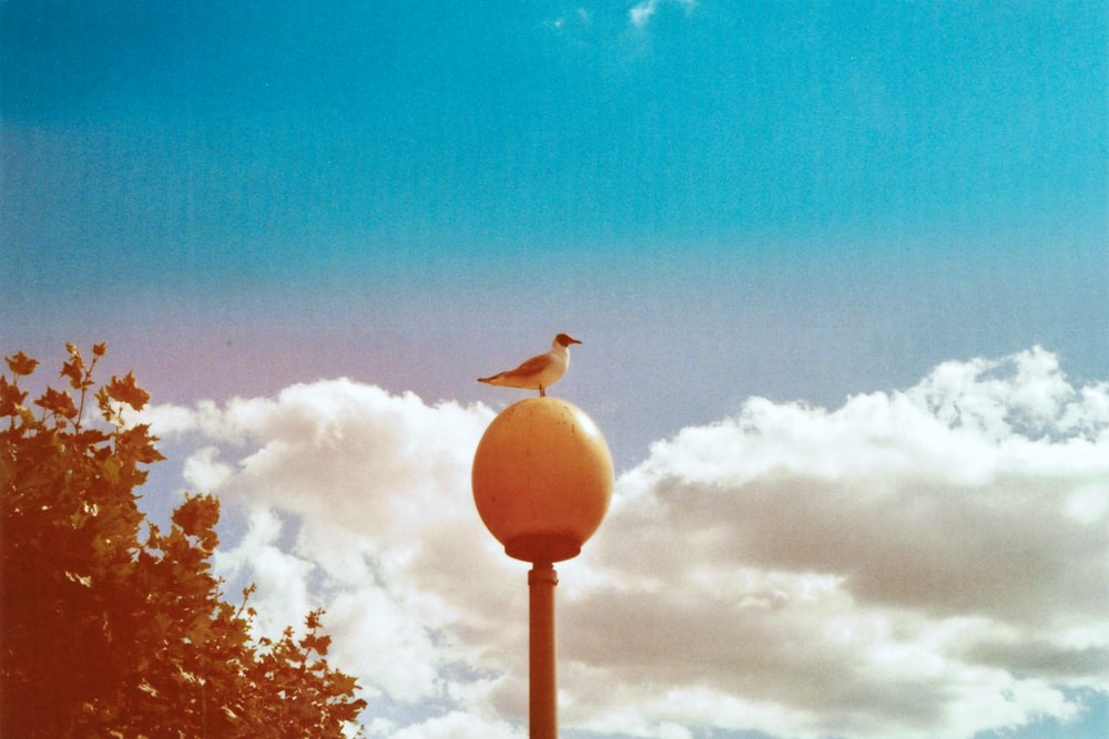white bird on brown lamp post under blue sky during daytime