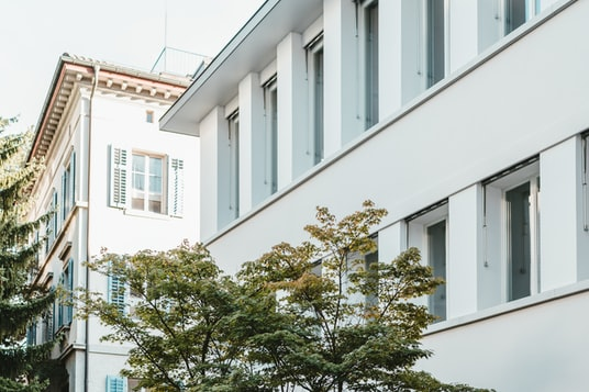 green tree in front of white concrete building