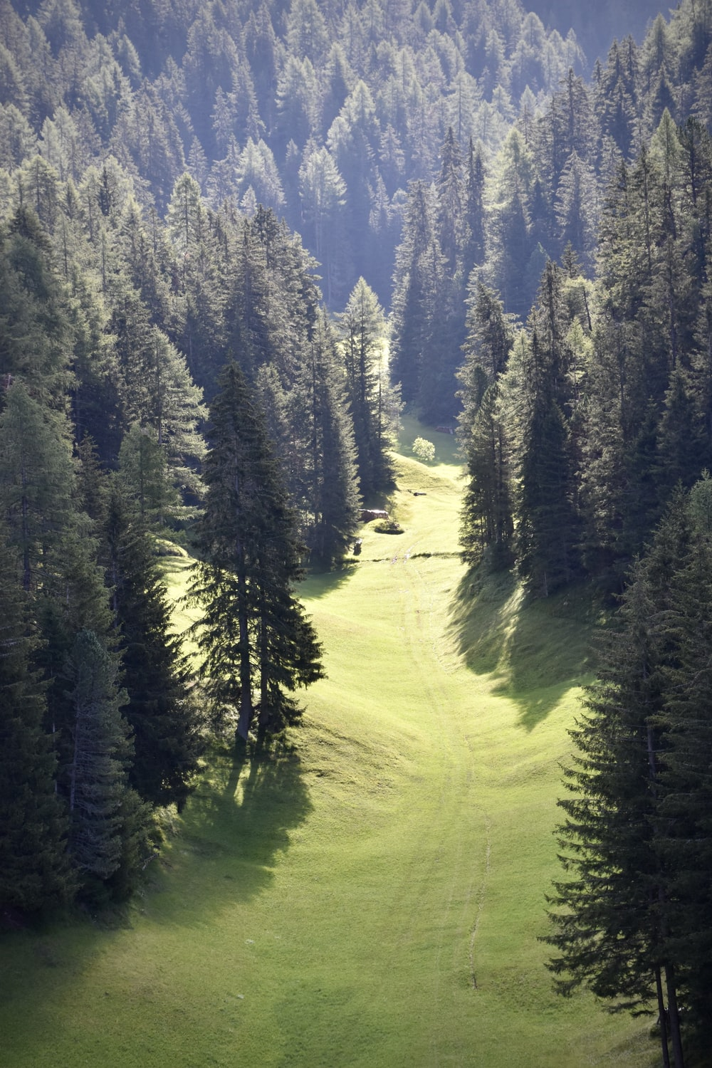 green pine trees on green grass field during daytime