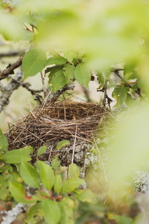 brown nest on brown nest