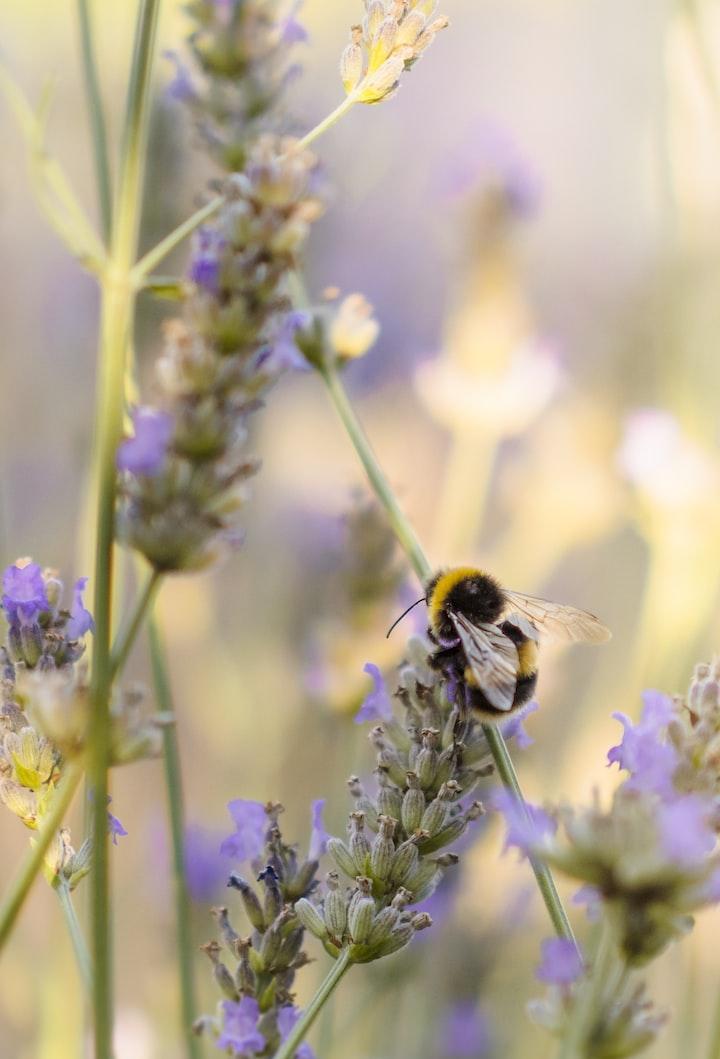 Honeybees Create My Happiness
