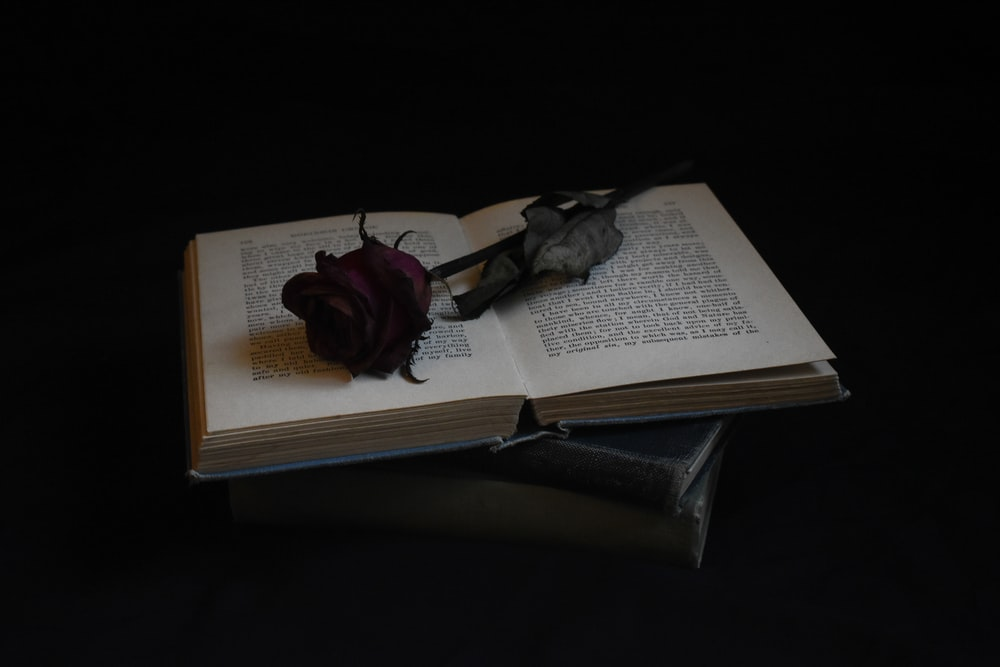 red rose on book page