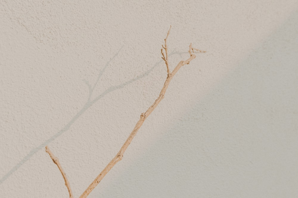 brown tree branch on white wall