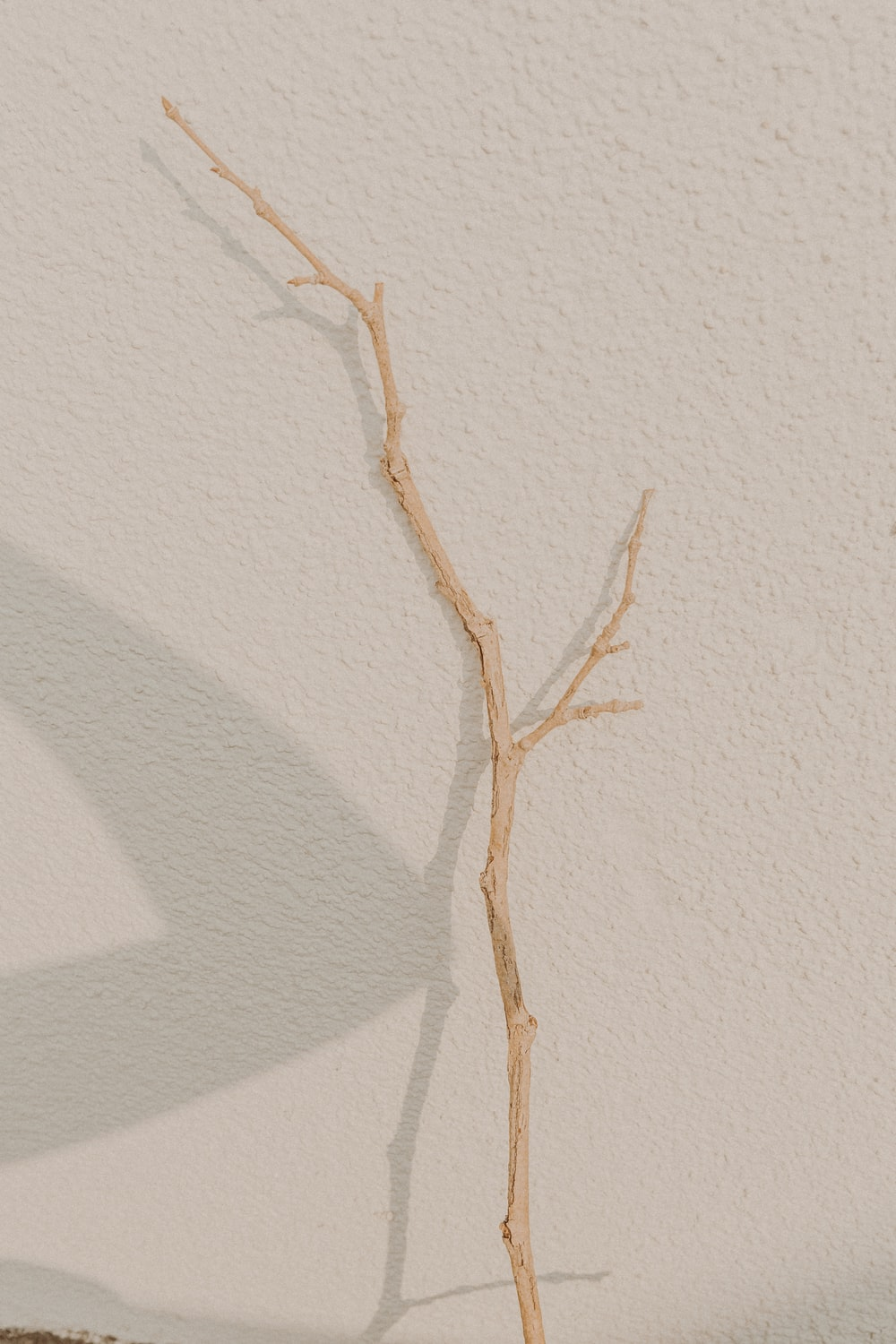 brown tree branch on white painted wall