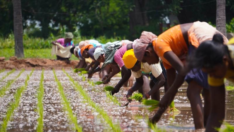 women work in the field