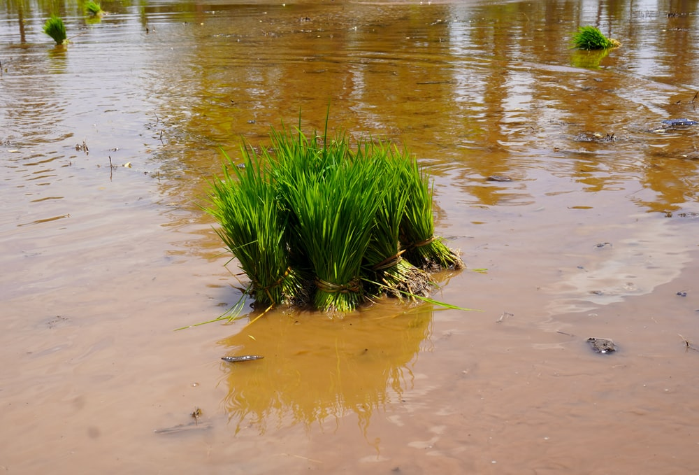 green grass on water during daytime