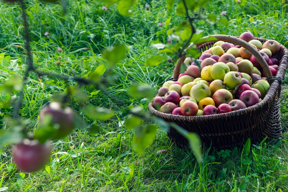 green and red apples in brown woven basket