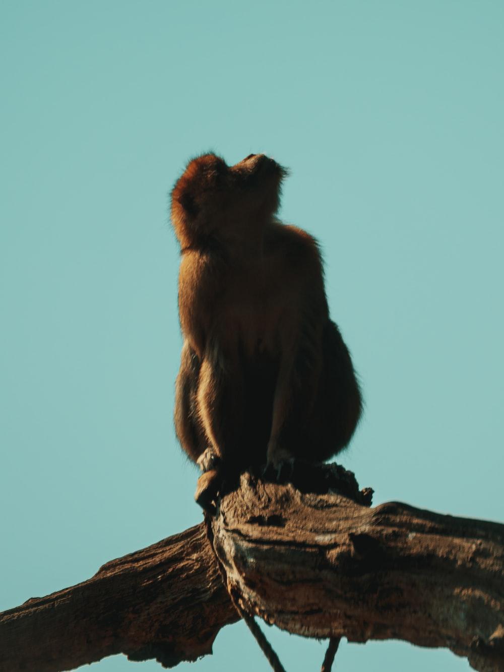 brown monkey sitting on brown wood log under blue sky during daytime