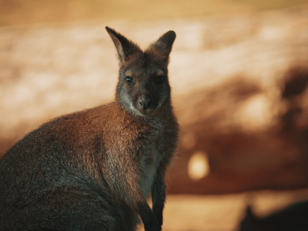 Feral Animals in Northern Australia - Future Directions International