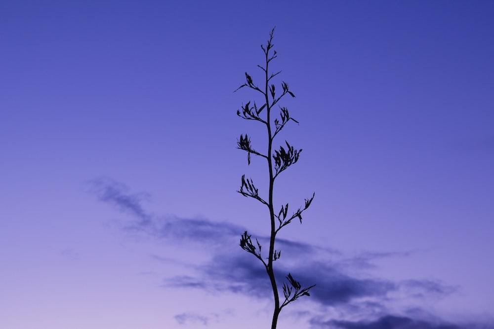 leafless tree under blue sky